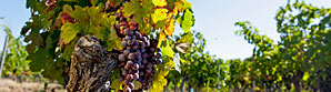 gallery-vineyard-creation.jpg